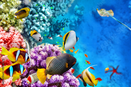 Photo Stands Coral reefs Underwater world with corals and tropical fish.