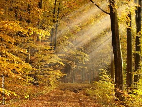 sunny autumn forest - 81565020