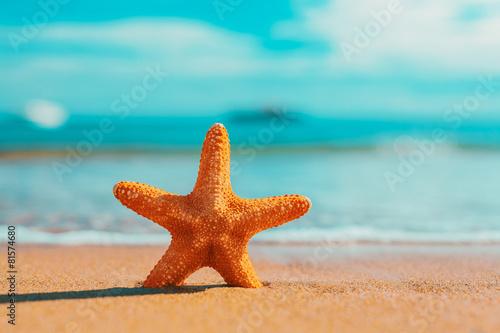 Fotografía big big orange starfish on the seashore.  summer concept.