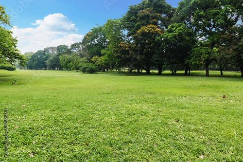 Montage in der Fensternische Gras Landscape lawn in the park