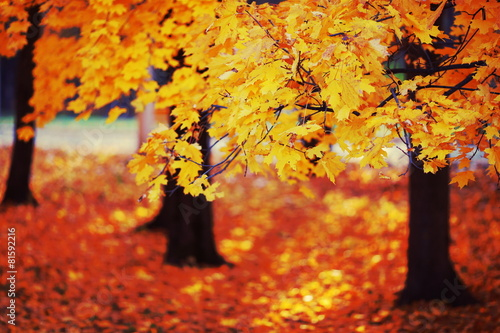 Foto op Canvas Baksteen autumn landscape with yellow trees in city park