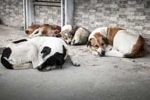 Group Of Homeless Dogs Sleepin...