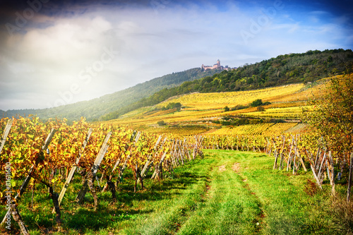 Photo Landscape with autumn vineyards. France, Alsace