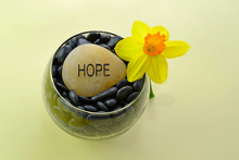 Yellow Daffodil And The Word Hope