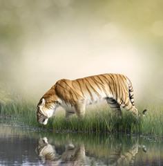 Fototapeta na wymiar Tiger Near Pond