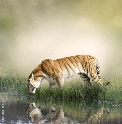 Obrazy na płótnie Canvas Tiger Near Pond