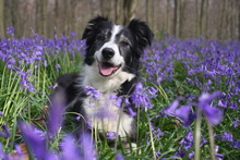 Pretty In The Bluebells