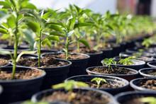 Small Plant Sapling