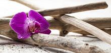 Symbols Of Zen Elements For Spa Treatment