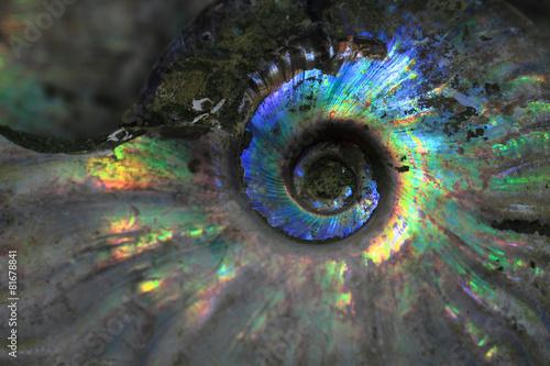 Photo ammonites fossil background