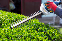 Cutting A Hedge With Electrica...