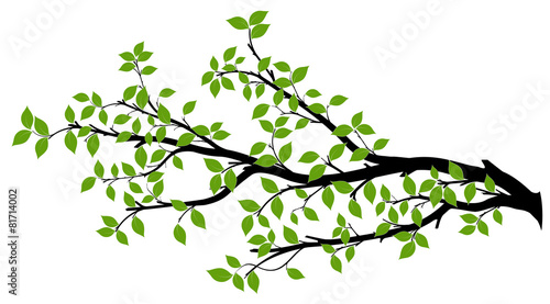 Tree Branch Silhouette, Vector Graphics Obraz na płótnie