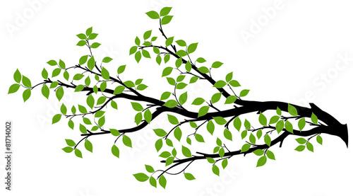 Fotografía  Tree Branch Silhouette, Vector Graphics