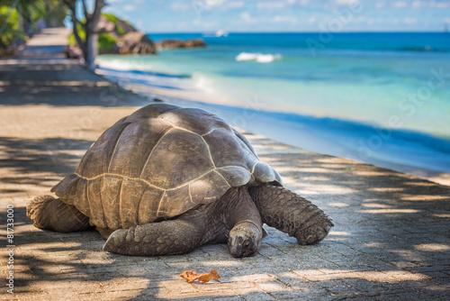Fond de hotte en verre imprimé Tortue Seychelles giant tortoise