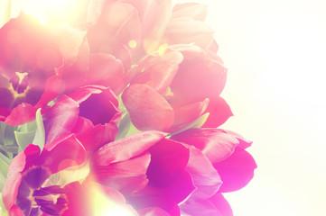 Panel Szklany Podświetlane Vintage Retro tulips image
