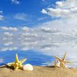 Beach background.Seashells and starfish