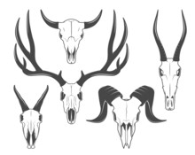 Animal Skulls Set