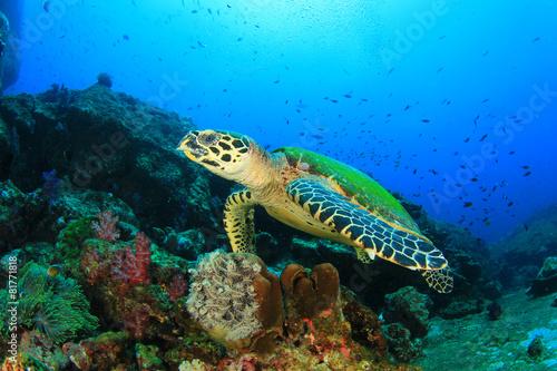 Foto op Canvas Duiken Hawksbill Sea Turtle on coral reef
