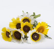 Gazania Bouquet Isolated On Wh...