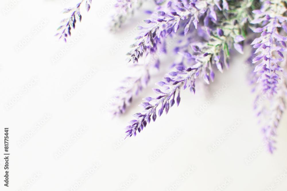 Valokuva  Lavender branch on a white background
