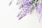 Lavender branch on a white background