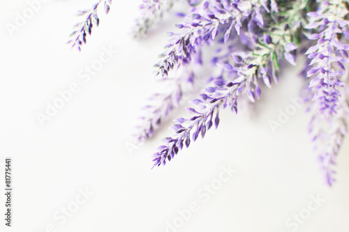 Foto op Plexiglas Lavendel Lavender branch on a white background