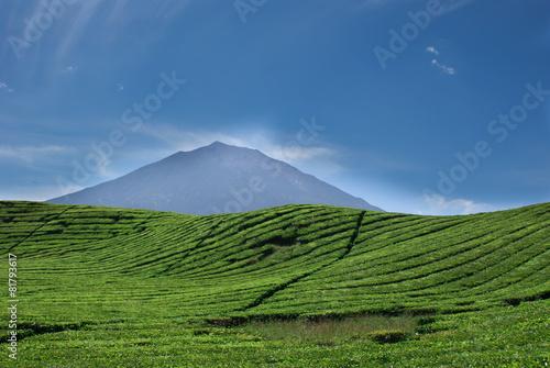 Photo  Tea plantations and the Kerinci volcano peak in Sumatra