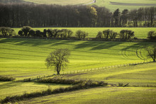Evening Landscape Of Fields In Spring With Beautiful Side Lighti