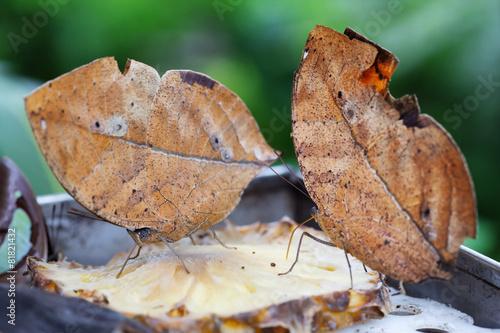 Fényképezés animal mimicry