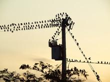 Birds Sitting On A Power Pole On A Sunny Evening