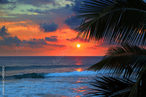 beautiful sea sunset and palm leaves Canvas Print