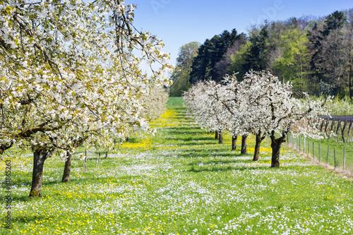 Photo  Frühling auf der Wiese