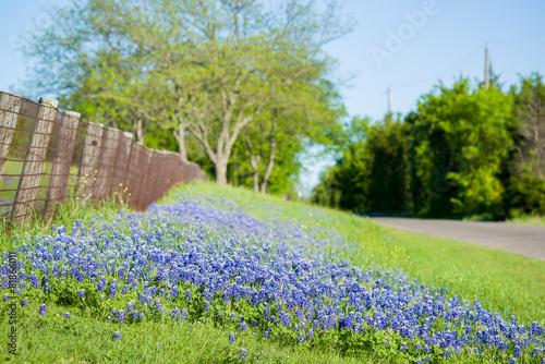Papiers peints Jardin Texas Wildflowers