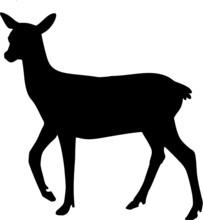 Silhouette Of Roe Deer