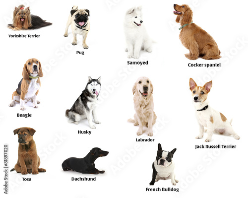 Photo Different breeds of dogs