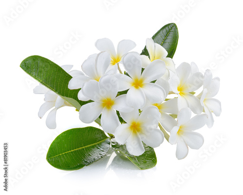 frangipani flower isolated white background Tableau sur Toile