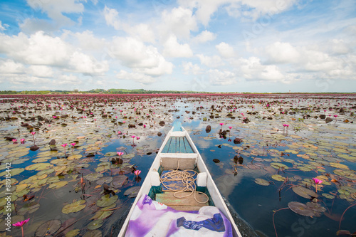 Garden Poster Lotus flower pink lotus in lotus swamp at