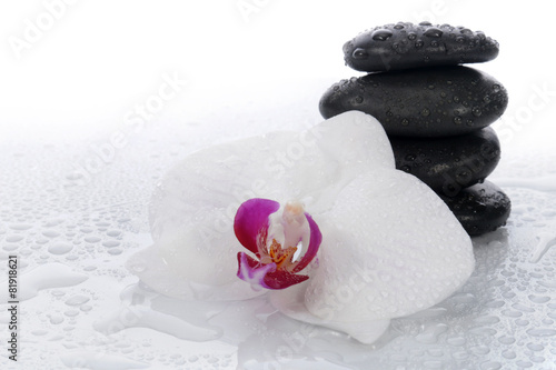 Obraz White orchid and spa stones - fototapety do salonu