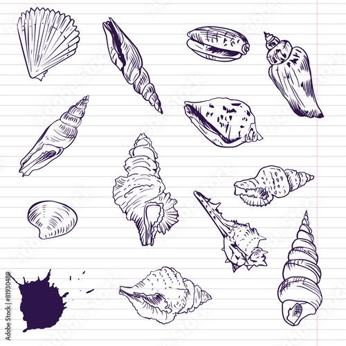 Fototapeta Ink drawing of shells, vector illustration obraz na płótnie