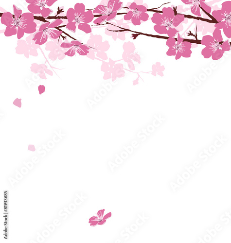Branches with pink flowers isolated on white background плакат