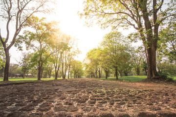 tree of paths of light