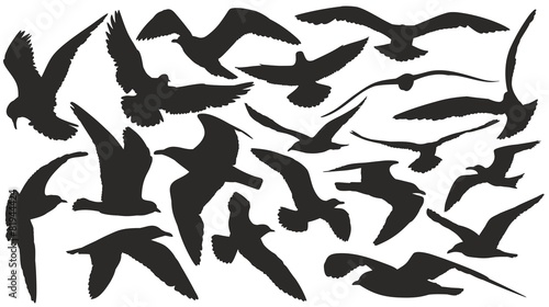 Fotografia, Obraz  Set of silhouettes of seagulls in flight.