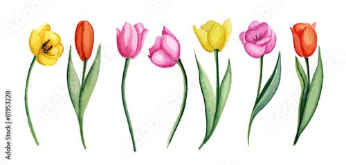 Tulips #81953220