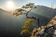 Sosna na Sokolicy w promieniach słońca