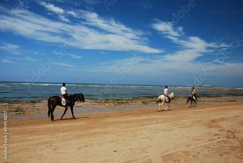 Photo  Cheval sur la plage