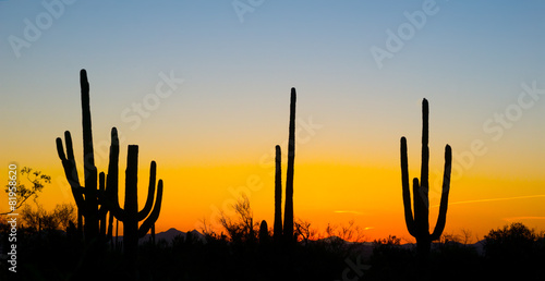 Landscape at sunset in Saguaro National Park, Arizona, USA