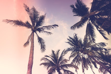 Silhouette Palm Tree