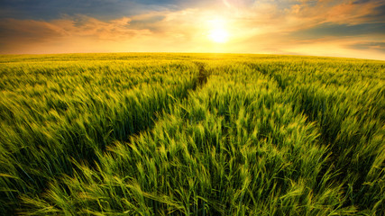Fototapeta Feld führt zur untergehenden Sonne