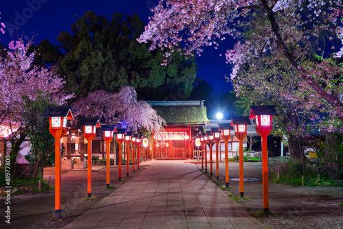 Cadres-photo bureau Edifice religieux 平野神社 灯籠 桜