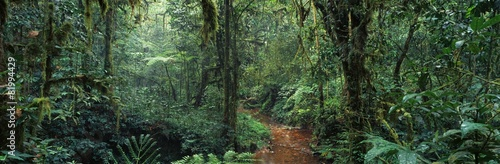 Acrylic Prints Africa jungle